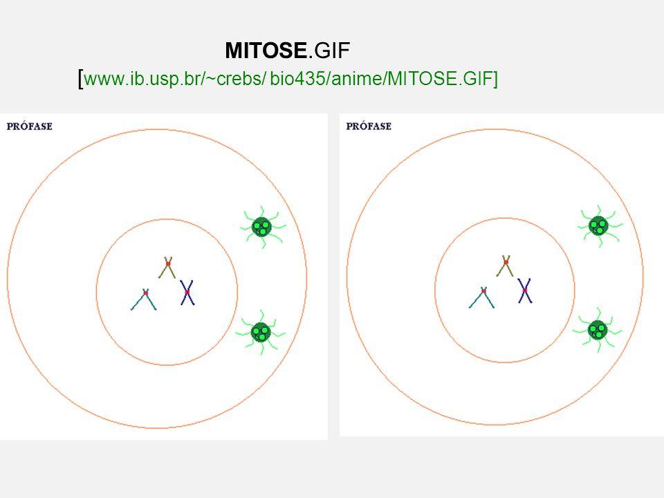 MITOSE.GIF [www.ib.usp.br/~crebs/ bio435/anime/MITOSE.GIF]